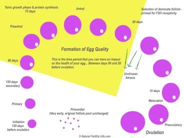 egghealthcycle1