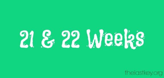 21-22-weeks